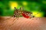 West Nile Identified in Mosquito Trap Sample